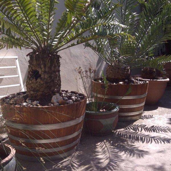 Used Wine Barrel Planter